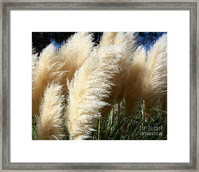 Majestic Pampas Grass Framed Print by Merton Allen