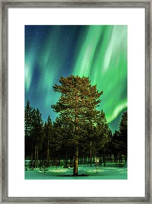Majestic Tree Under The Northern Lights Karasjok Norway Framed Print
