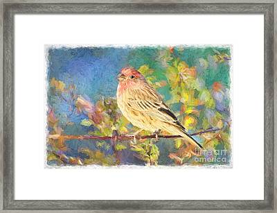 Male Housefinch - Digital Paint Framed Print by Debbie Portwood