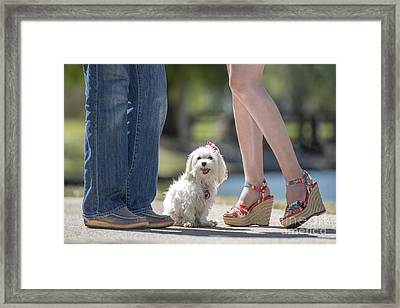 Maltese In The Middle Framed Print