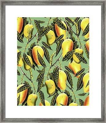 Mango Season Framed Print by Uma Gokhale