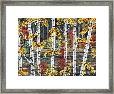 Manitoba Birch  Framed Print