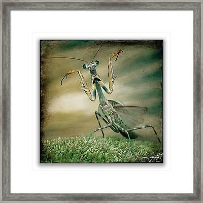 Mantis 16 Framed Print by Ingrid Smith-Johnsen