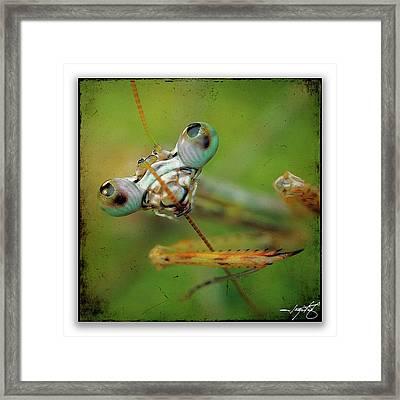 Mantis 19 Framed Print by Ingrid Smith-Johnsen