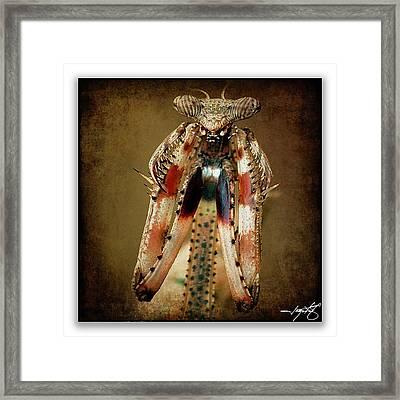 Mantis 7 Framed Print by Ingrid Smith-Johnsen