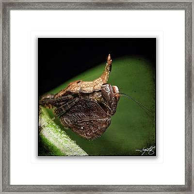 Mantis 8 Framed Print by Ingrid Smith-Johnsen