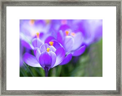 Framed Print featuring the photograph Marching Into Spring by Rebecca Cozart