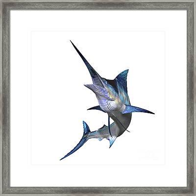 Marlin Framed Print by Corey Ford