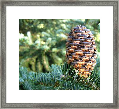 Framed Print featuring the photograph Masterful Construction - Spruce Cone by Angie Rea