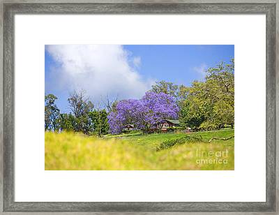 Maui Upcountry Framed Print by Ron Dahlquist - Printscapes