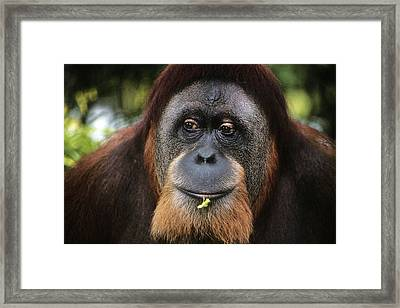Maybe Darwin Was Right Framed Print by Carl Purcell