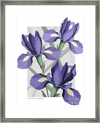 Mediterranean Iris Framed Print by David Azzarello