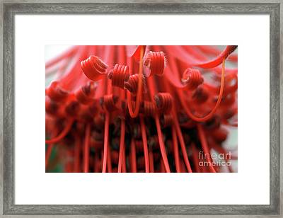 Framed Print featuring the photograph Merry Go 'round by Stephen Mitchell