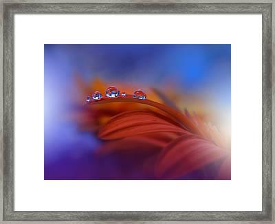 Metamorphosis Framed Print by Juliana Nan