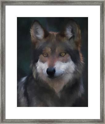 Mexican Grey Wolf Da Framed Print by Ernie Echols