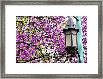 Michigan State University Spring 7 Framed Print by John McGraw