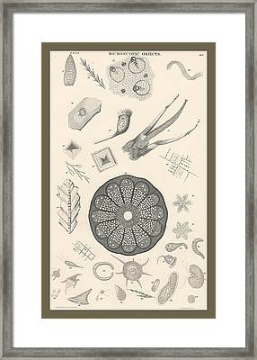 Microscopic Objects Framed Print by Rob Dreyer
