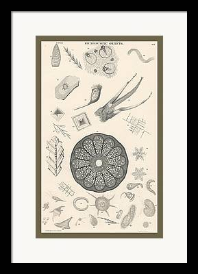 Nucleus Drawings Framed Prints