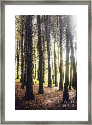 Misty Forest Framed Print by Carlos Caetano