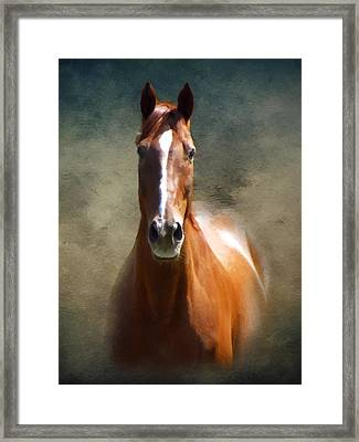 Misty In The Moonlight P D P Framed Print