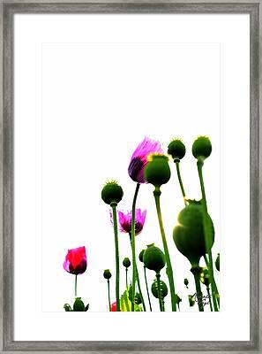 Mohnblumen Framed Print by Renata Vogl