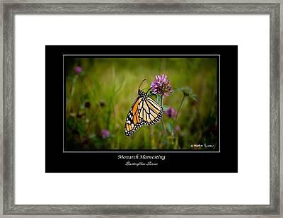Monarch Harvesting Framed Print by Mathias Rousseau