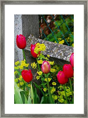Framed Print featuring the photograph Monet by Nancy Bradley