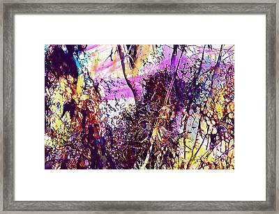 Monk Parakeet Parrot Bird Tree  Framed Print
