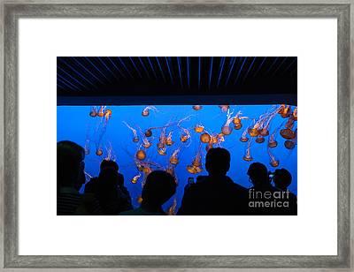 Monterey Bay Aquarium Framed Print