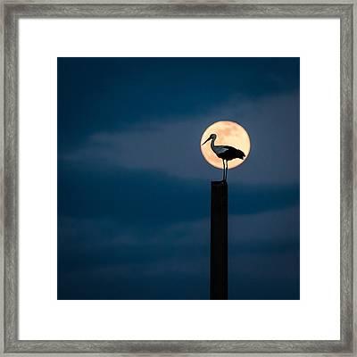 Moon Stork Framed Print by Catalin Pomeanu