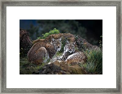 Moonschein Lovers Framed Print by Gianfranco Barbieri