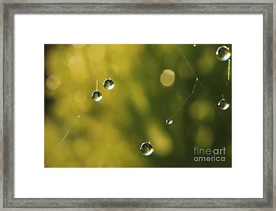 Morning Dew 3 Framed Print