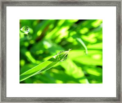 Morning Dew Framed Print by Lisa Jayne Konopka