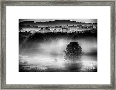 Morning Fog Framed Print by Nicki McManus