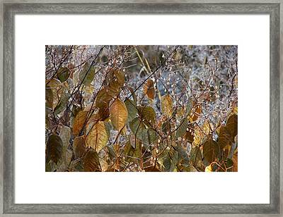 Morning Frozen Framed Print by JAMART Photography