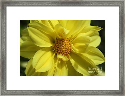Framed Print featuring the photograph Morning Light by Edward R Wisell