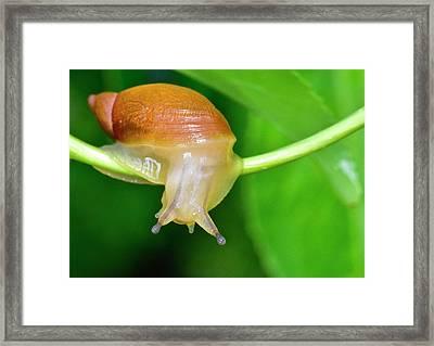 Morning Snail Framed Print