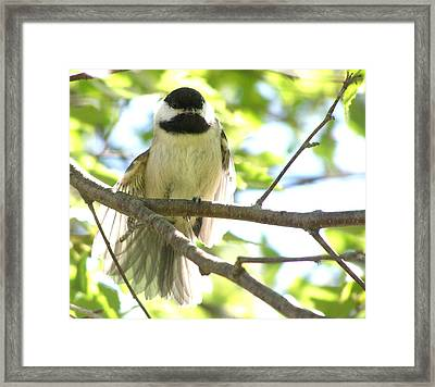 Framed Print featuring the photograph Morning Stretch by Angie Rea