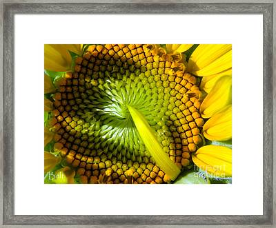 Morning Sun At Snickerhaus Framed Print by Christine Belt