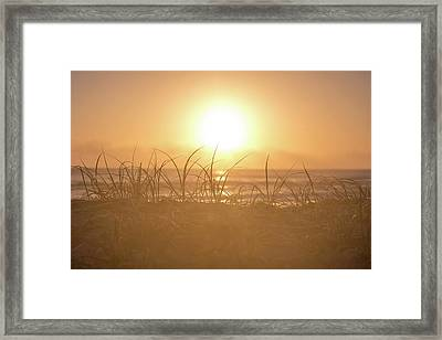 Morning Sun Framed Print
