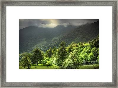 Morning Sun Framed Print by Svetlana Sewell