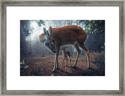 Mother And Fawn Framed Print by John Wilhelm