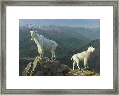 Mountain Goats Framed Print by MotionAge Designs