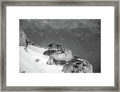 Mountain Goats Framed Print by Medina Rosa