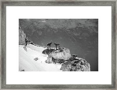 Mountain Goats Framed Print