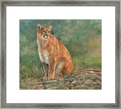 Mountain Lion Framed Print by David Stribbling