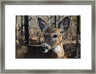 Mr. Cool Framed Print by Bill Stephens