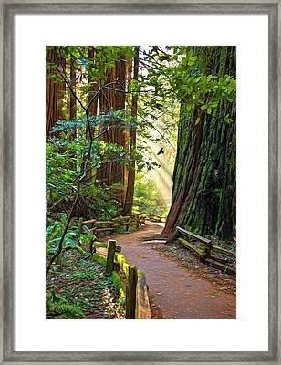 Muir Woods Framed Print by Patricia Stalter