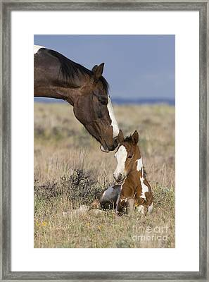Mustang Mare And Foal Framed Print by Jean-Louis Klein & Marie-Luce Hubert