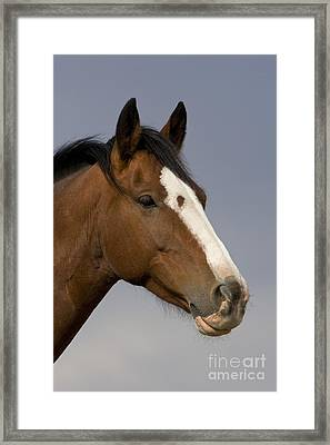 Mustang Mare Framed Print by Jean-Louis Klein & Marie-Luce Hubert